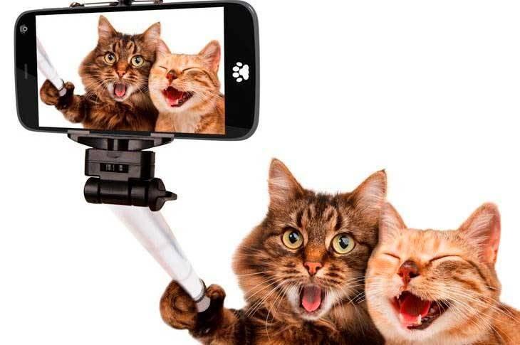 Mi palo selfie no hace fotos: ¿qué puedo hacer?